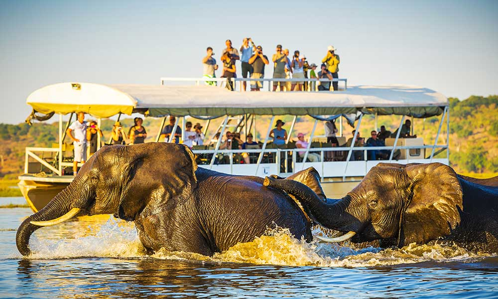 Elephants and tourists in Botswana