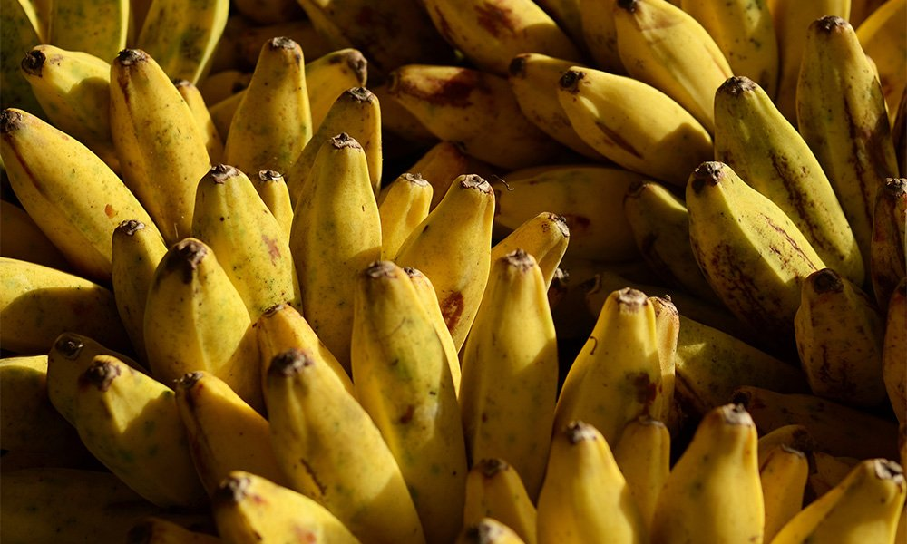This is a photo of bananas